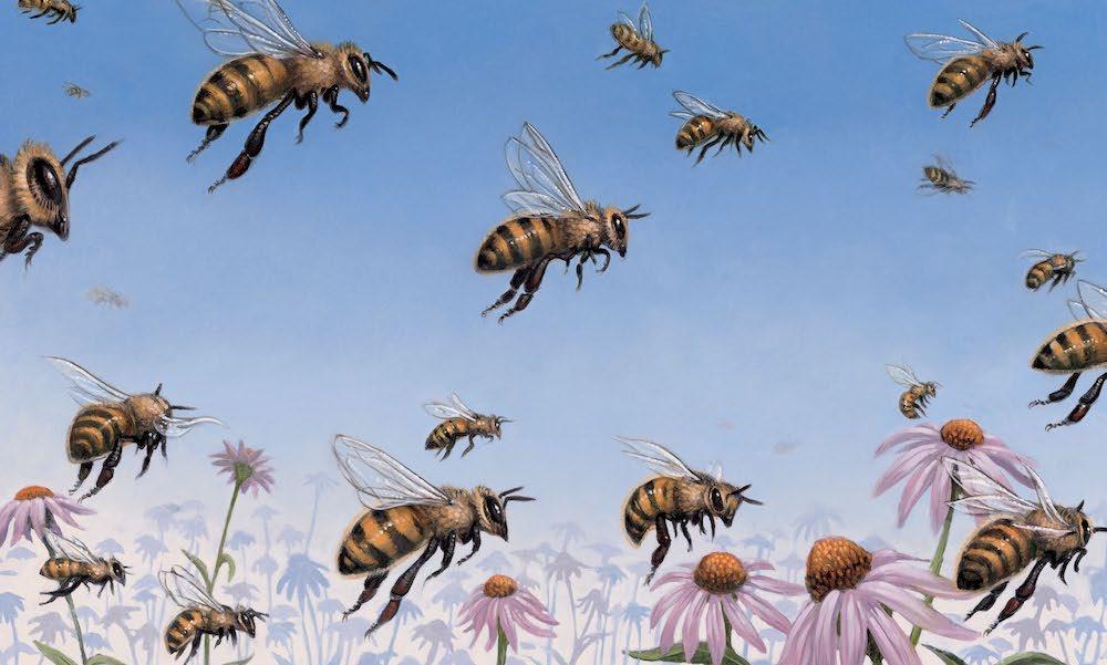 Honeybee Cover56